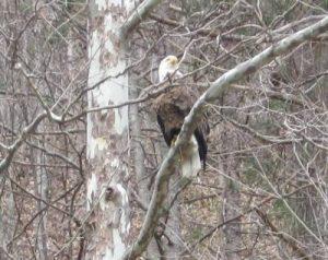 b2ap3_thumbnail_earth-day-eagle